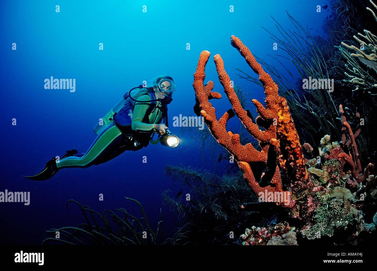 Scuba Diver e barriera corallina Dominica French West Indies Mar dei Caraibi Immagini Stock