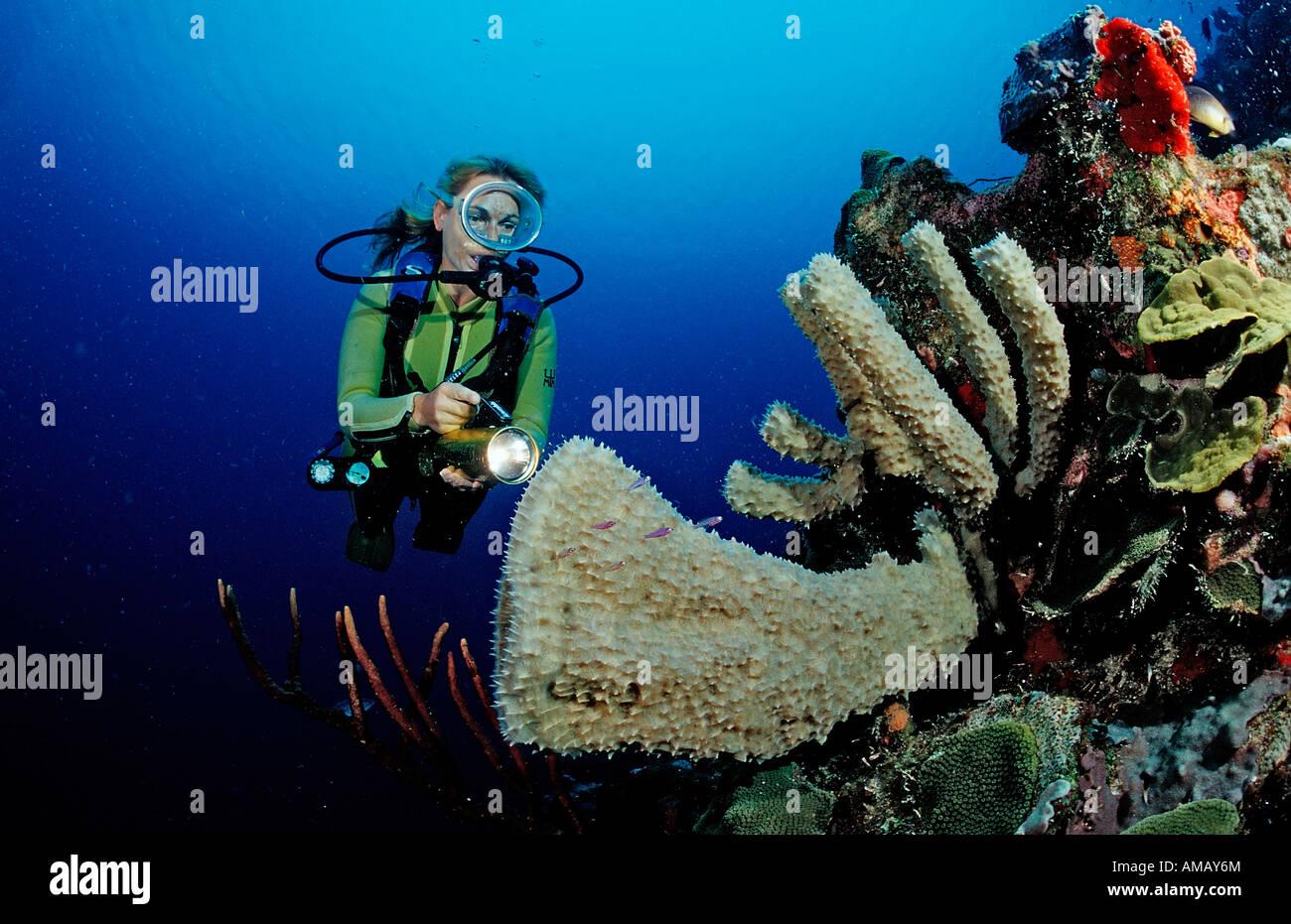 Scuba Diver e barriera corallina Saint Lucia French West Indies Mar dei Caraibi Immagini Stock