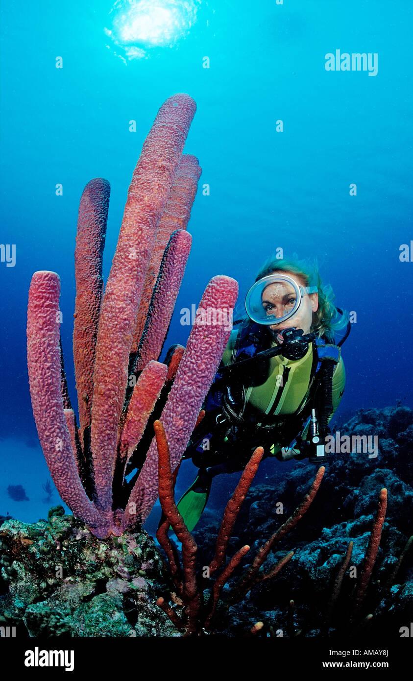 Scuba Diver e tubo da stufa di lavanda spugna Aplysina archeri Saint Lucia French West Indies Mar dei Caraibi Immagini Stock