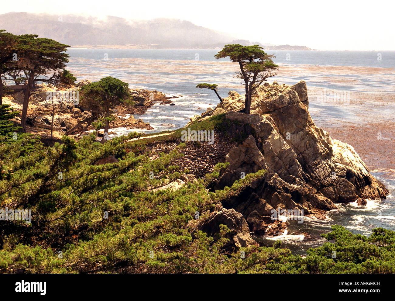'Il Lone Cypress spiaggia ghiaiosa;California;USA; Immagini Stock
