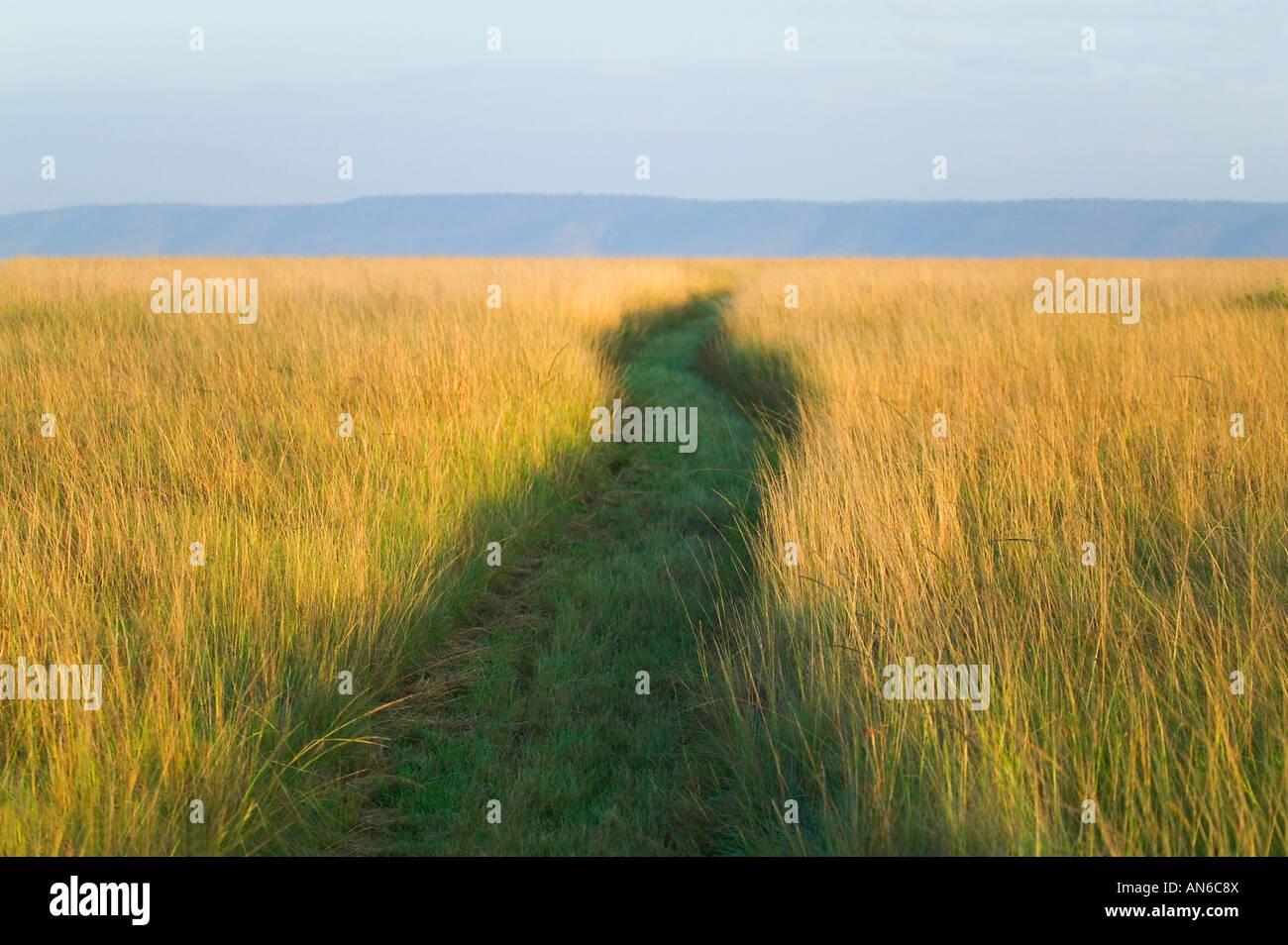Sentiero tra erba alta sulla savana, Masai Mara, Kenya Foto Stock