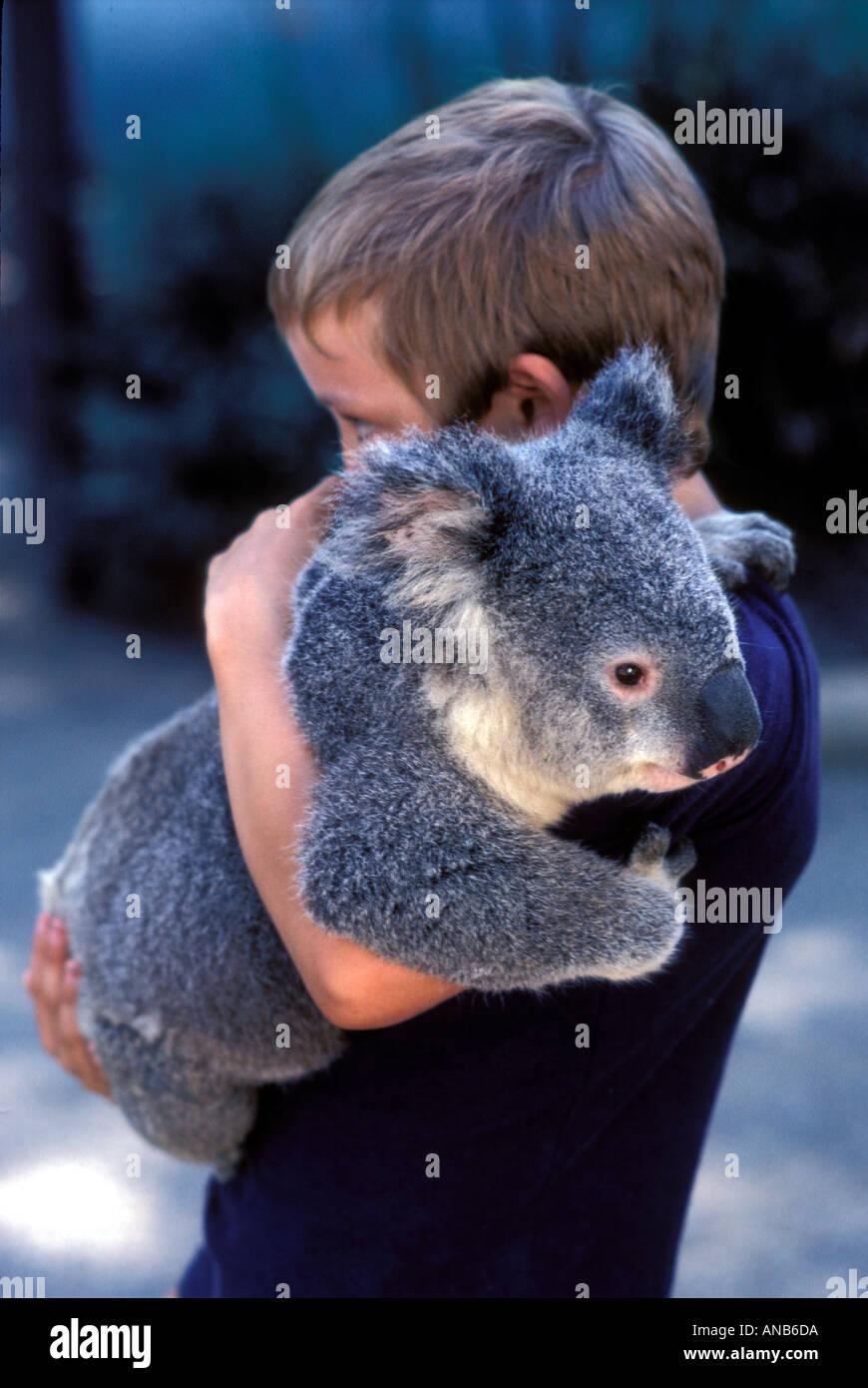 Ragazzo di coccole un orso koala in Australia Immagini Stock