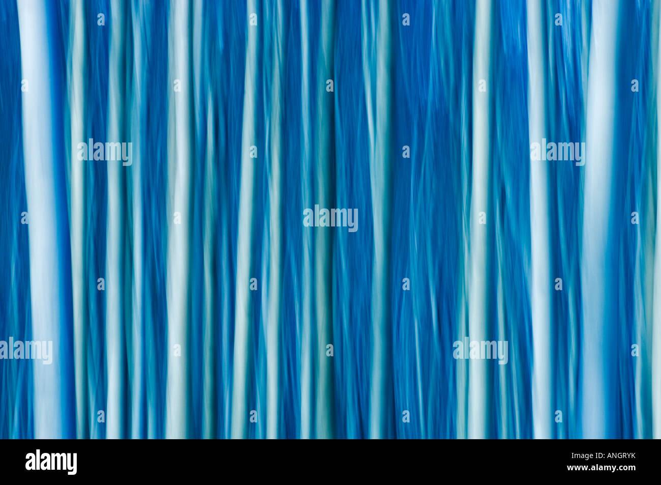 Abstract di alberi, il Parco Nazionale di Jasper, Alberta, Canada. Immagini Stock