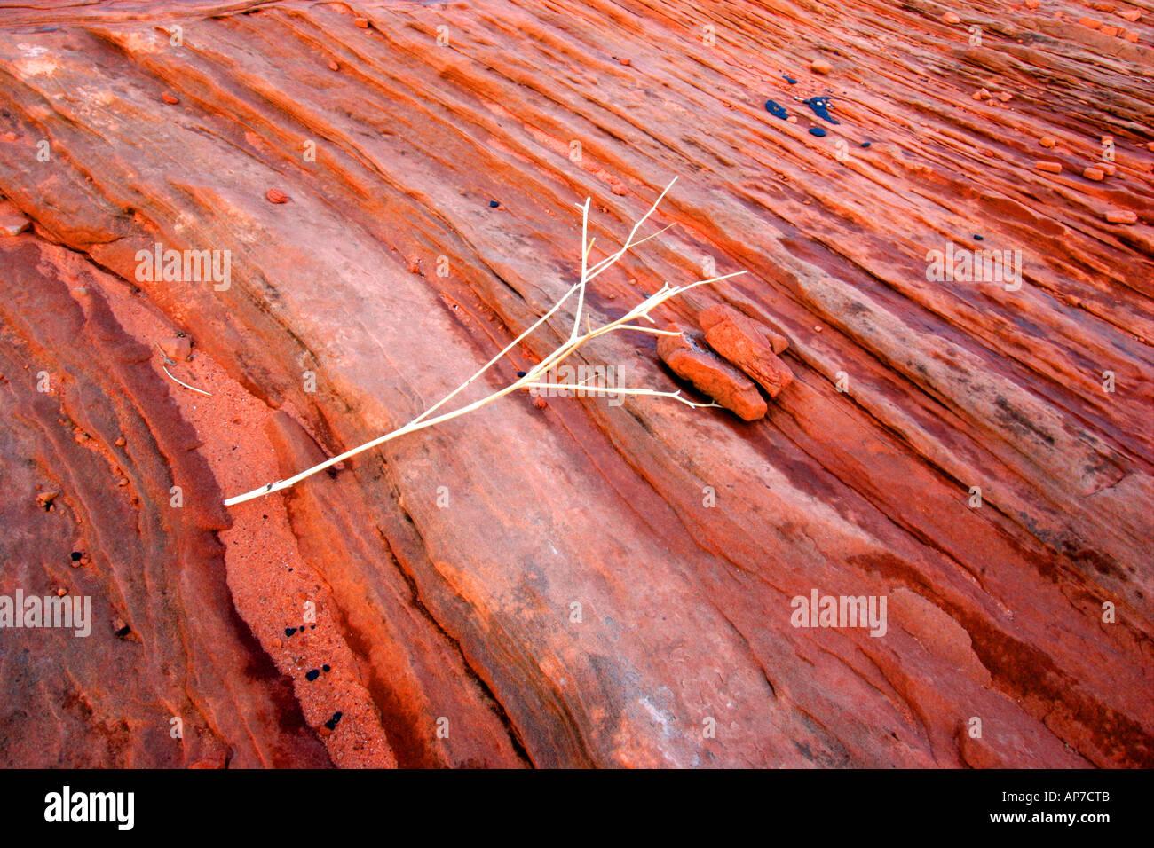 Arenaria vicino a pagina, Arizona Foto Stock