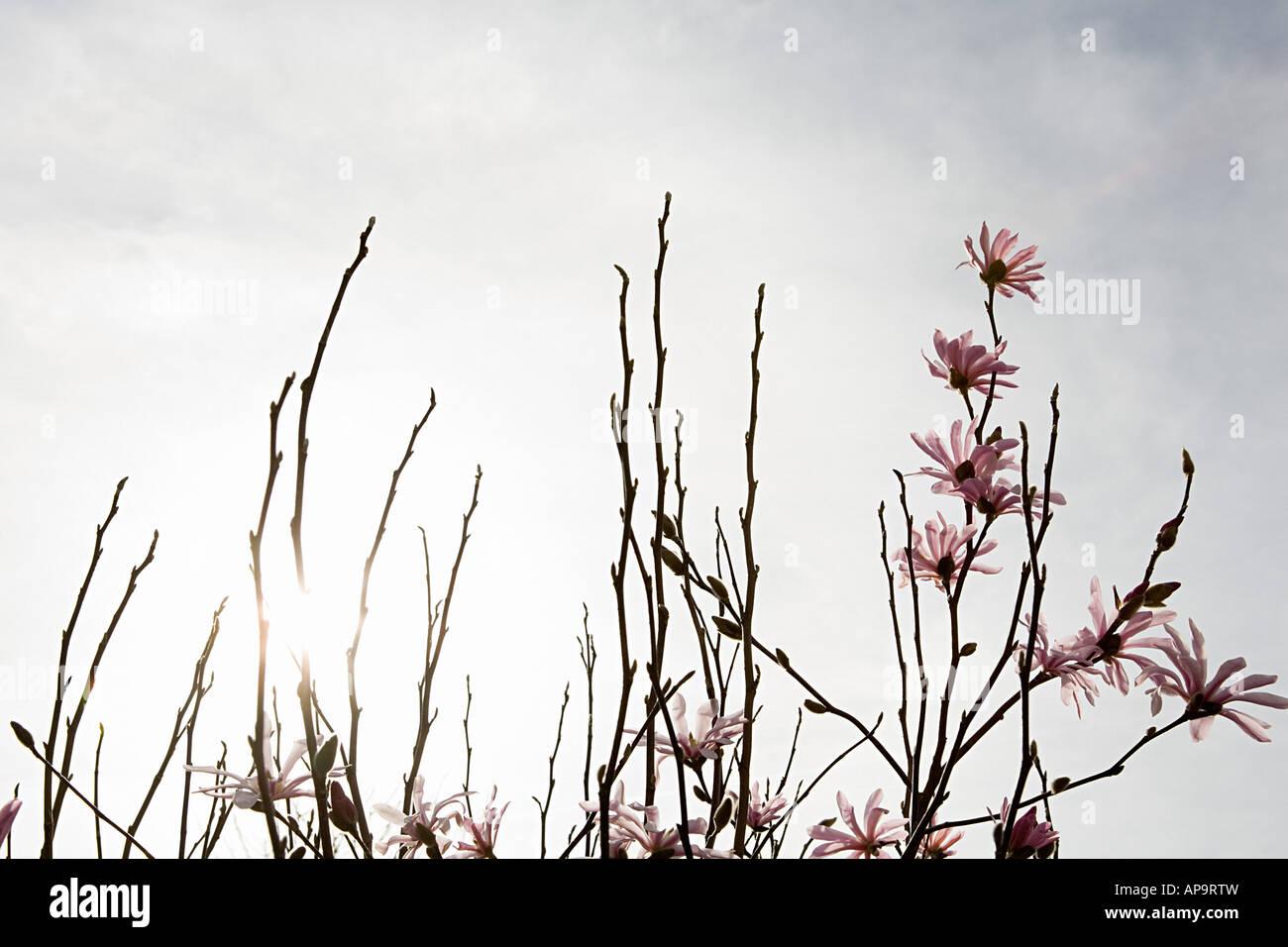 Blossom sui rami Immagini Stock