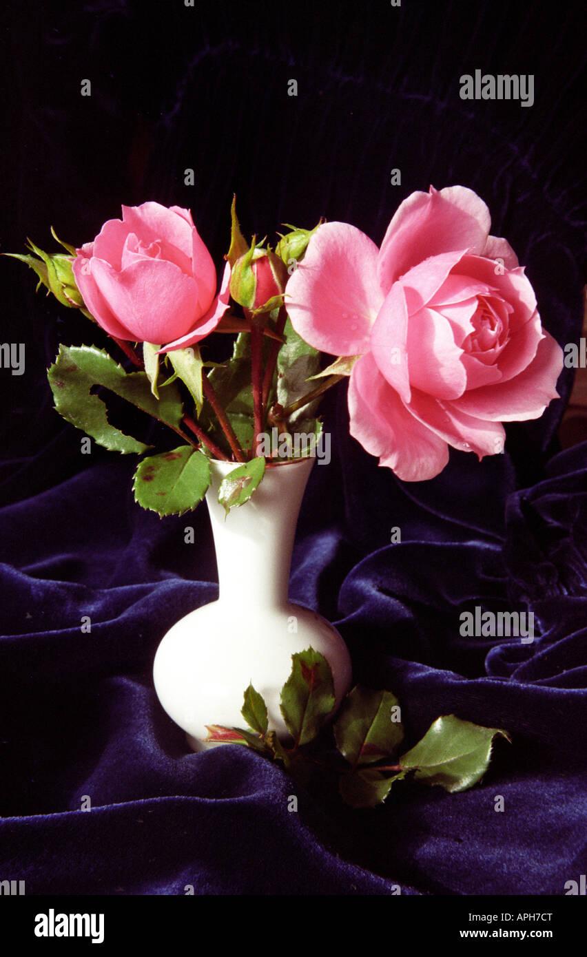 Rose rosa vase water immagini rose rosa vase water fotos for Rose da giardino