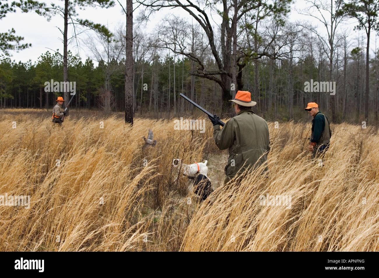 Cacciatori di quaglia inglese il puntatore sul punto e flussaggio Bird Buckeye Lodge Georgia Immagini Stock