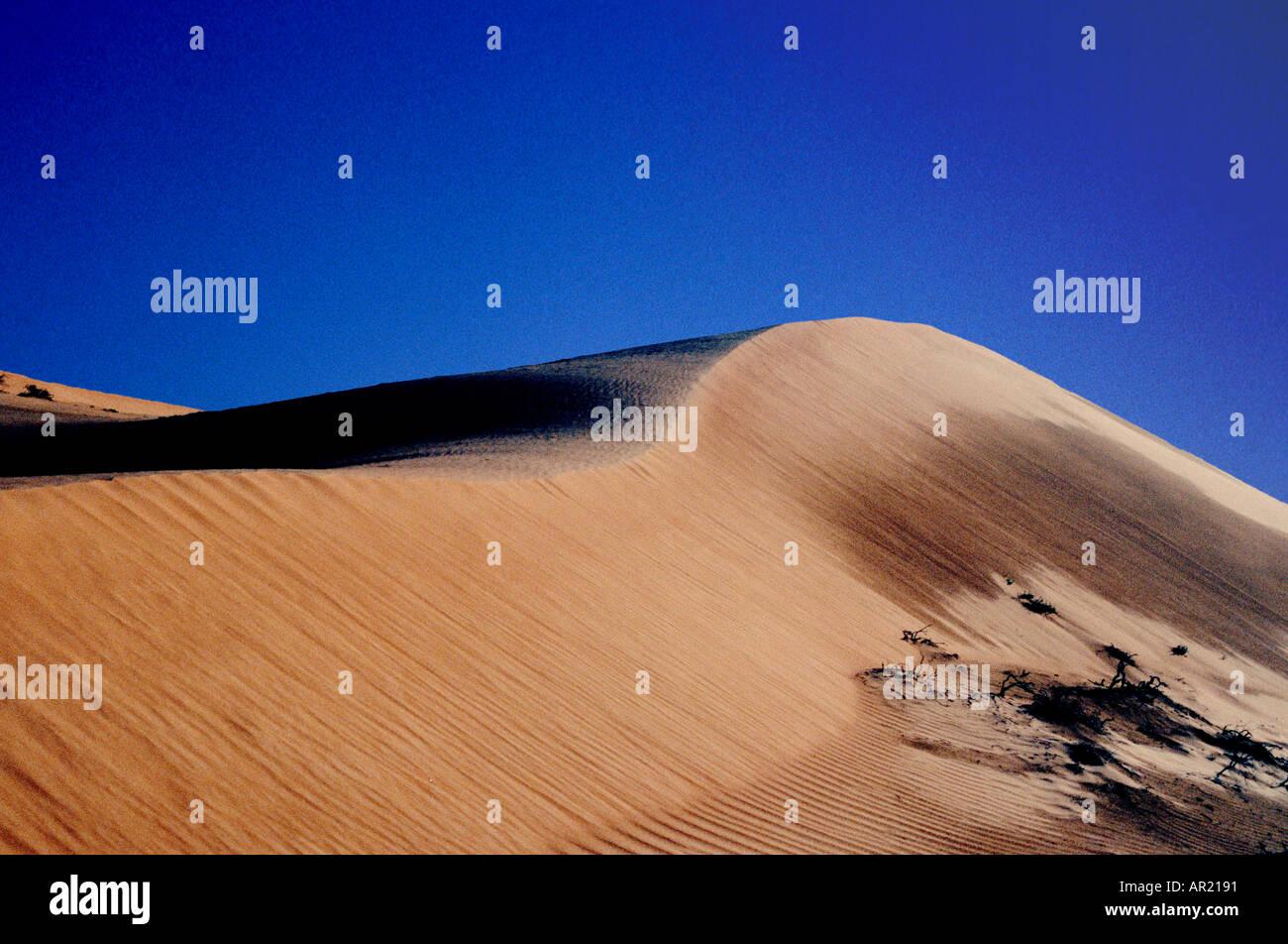 Dune di sabbia in Wahiba Sands in Oman Immagini Stock