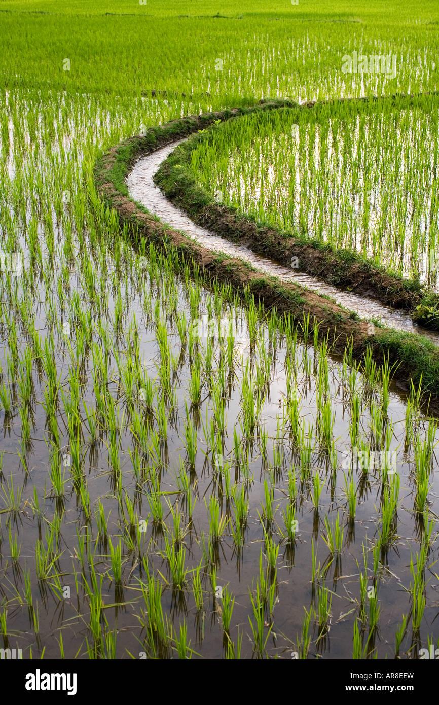 Acqua di irrigazione canale attraverso una risaia in India Immagini Stock