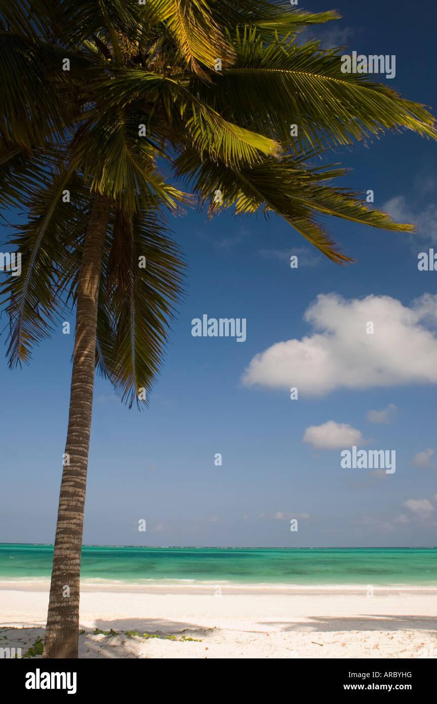 Un albero di palma su una spiaggia di sabbia bianca e mare smeraldo sul bordo dell'Oceano Indiano, Paje, Zanzibar, Immagini Stock
