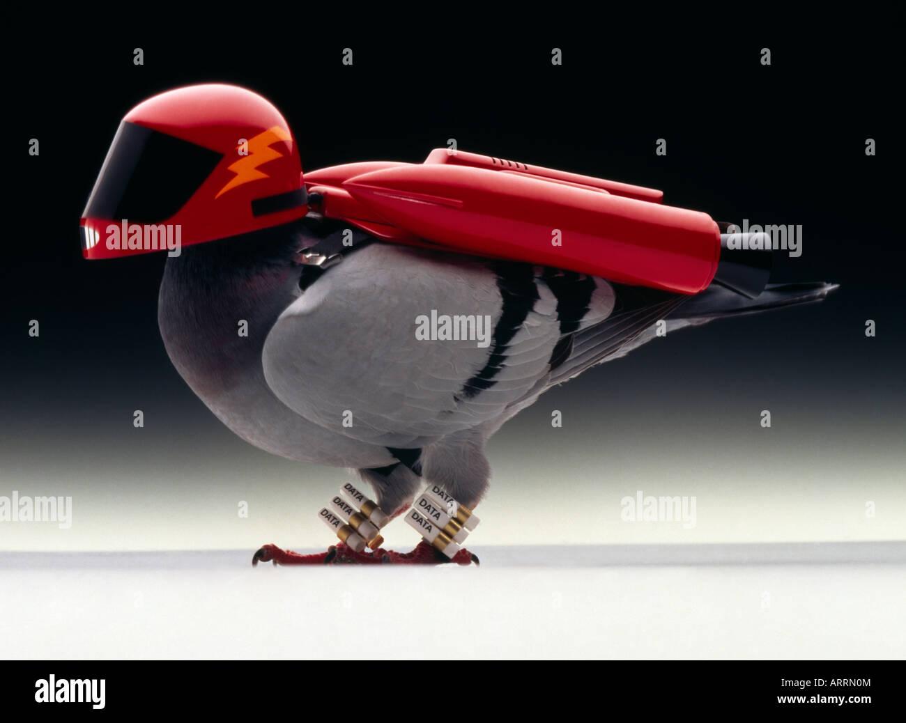 Turbo alimentato il piccione viaggiatore Immagini Stock