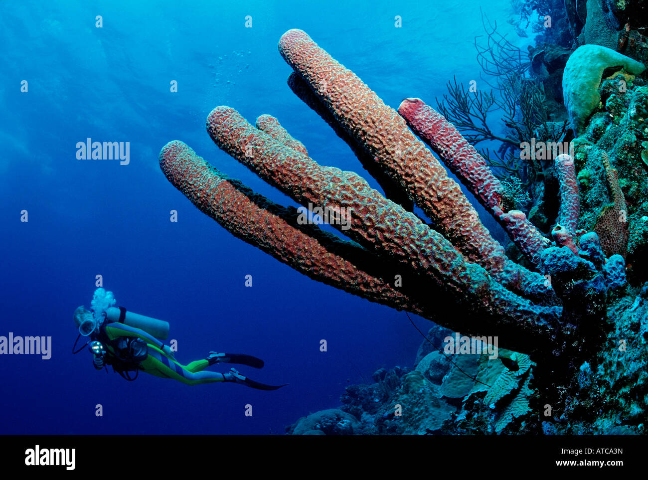 Subacqueo e Spugna di mare dei Caraibi Curacao Immagini Stock