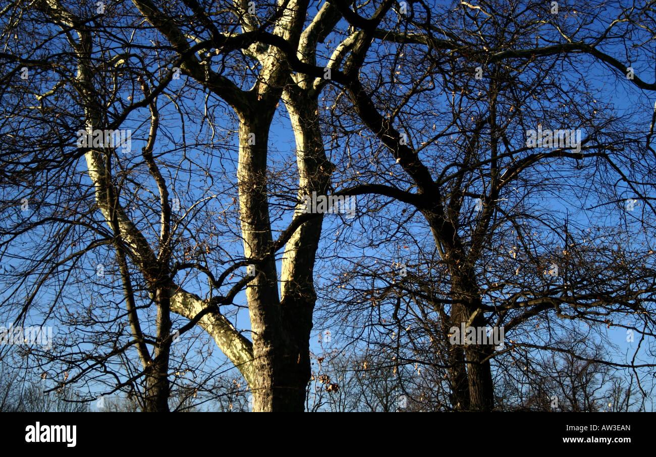 Inverno a rami di alberi Immagini Stock