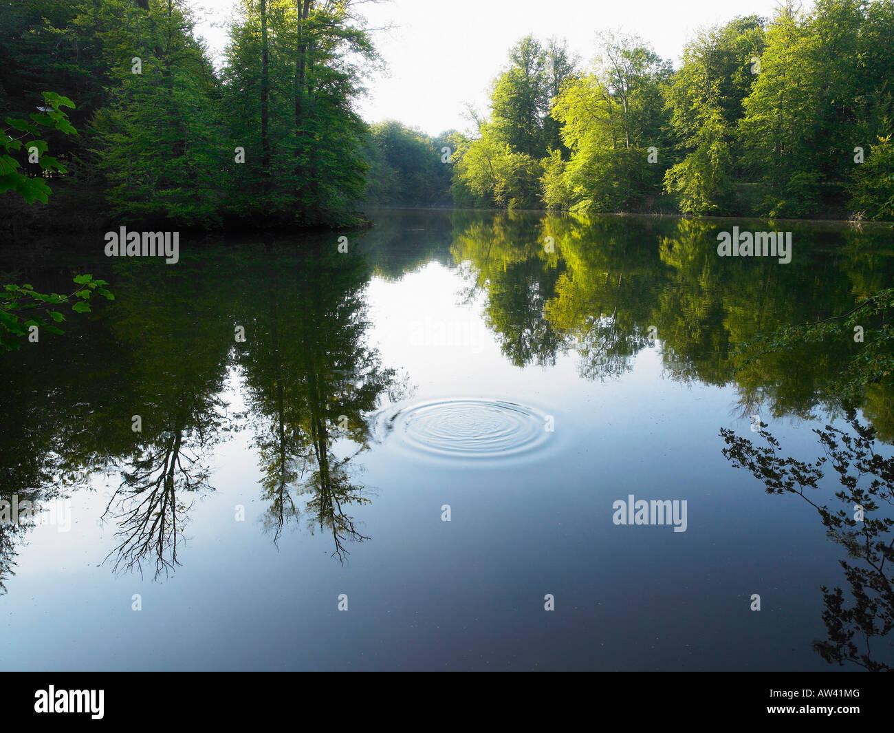 Riddle sulle sponde di un lago. Immagini Stock