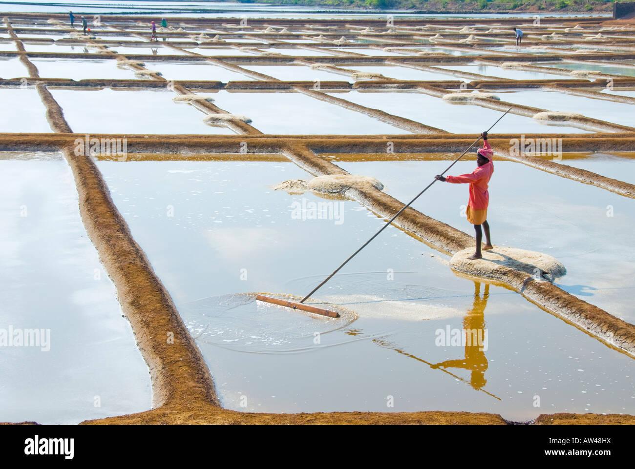 Un uomo di raccolta del sale del mare da una coppa di sale in India Immagini Stock