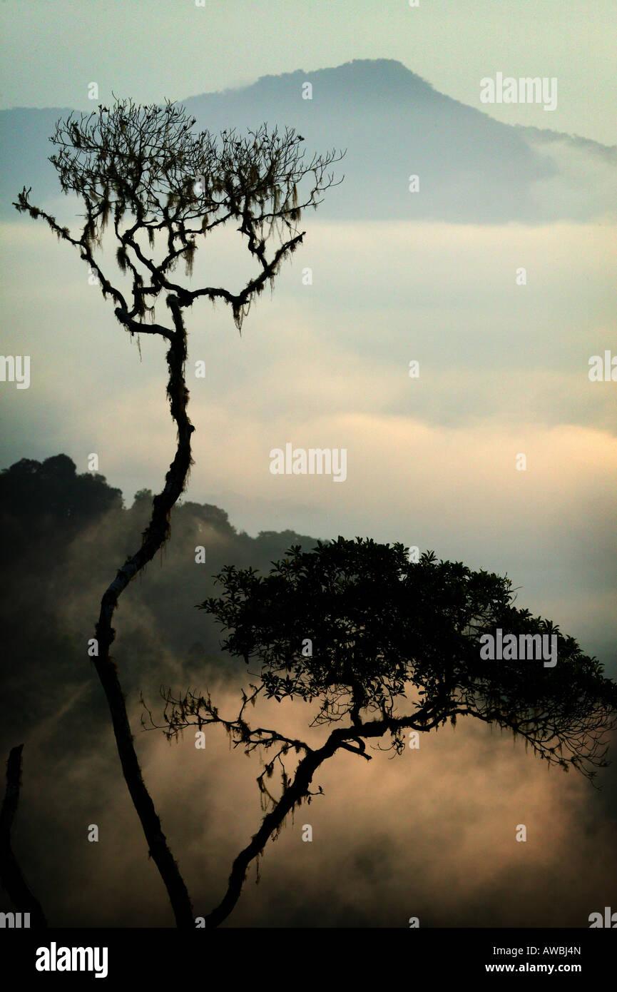 Misty paesaggi all'alba nella Pirre montagne del Parco Nazionale del Darién , provincia di Darien, Repubblica Immagini Stock