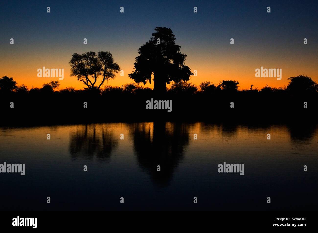 Silhouette di un baobab (centro), Adansonia digitata, refelcted in corrispondenza di un foro di irrigazione al tramonto Immagini Stock