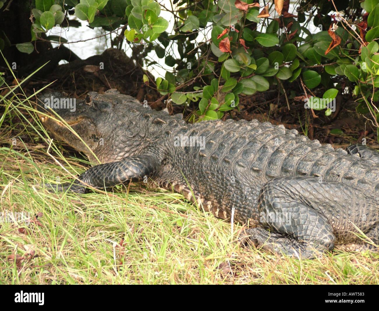 AJD39496, Everglades National Park, FL, Florida Foto Stock