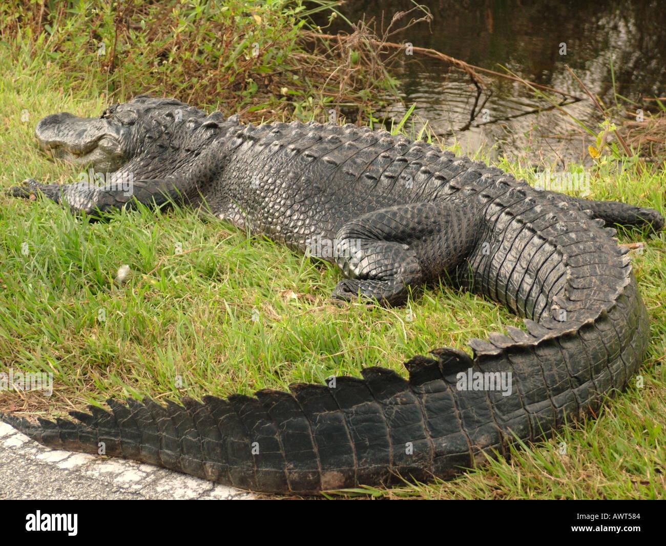 AJD39497, Everglades National Park, FL, Florida Foto Stock
