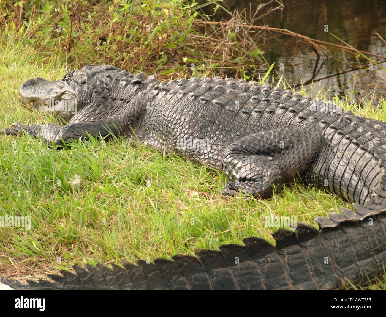 AJD39498, Everglades National Park, FL, Florida Foto Stock