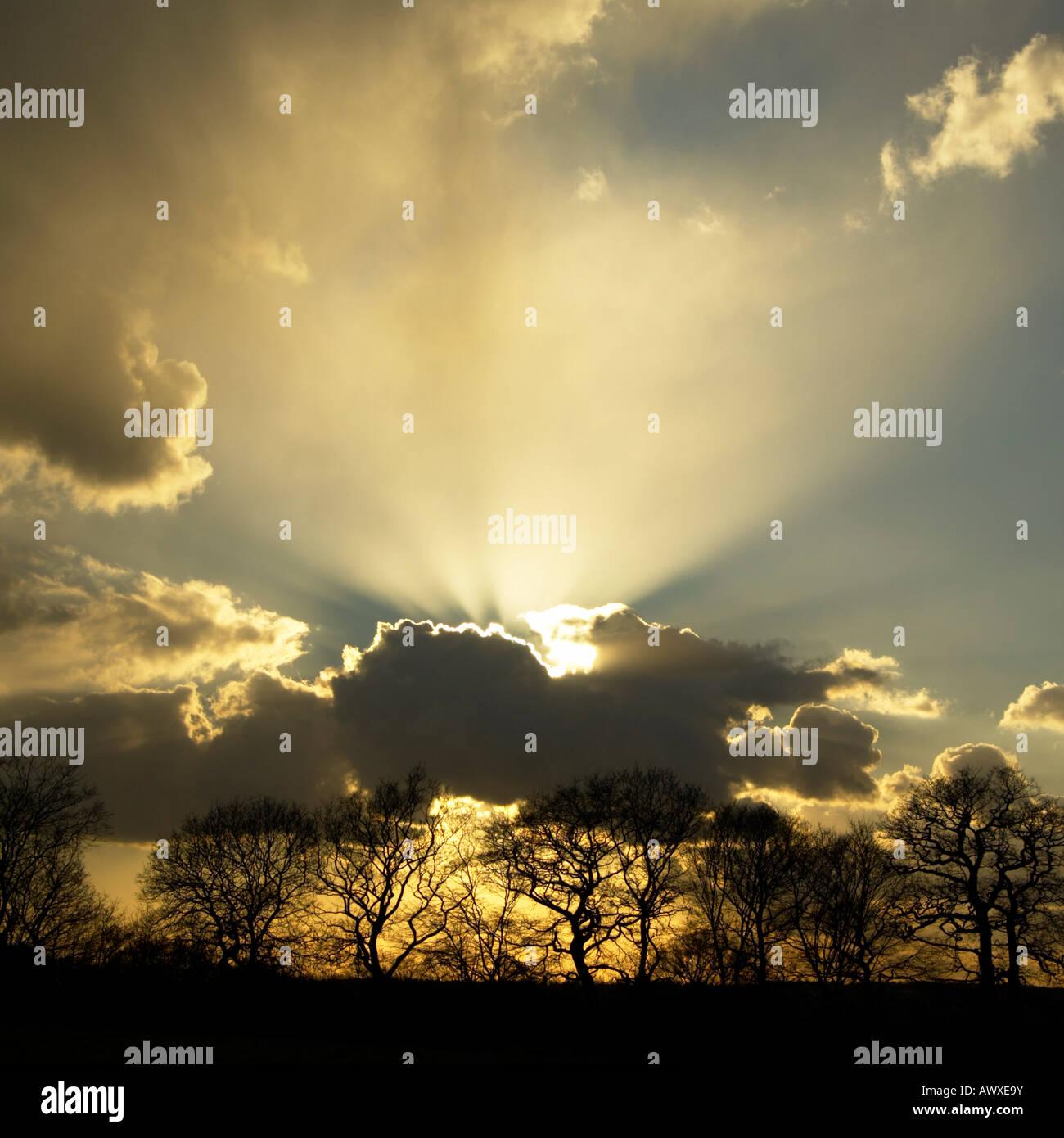 Nel tardo pomeriggio rottura sole da dietro le nuvole scure, con raggi crepuscolari e stagliano alberi. Immagini Stock