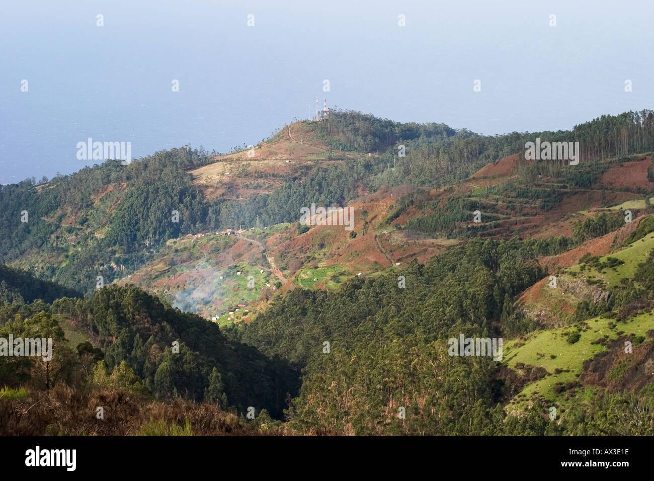 Paul da Serra la deforestazione foresta di eucalipti di Madera Immagini Stock