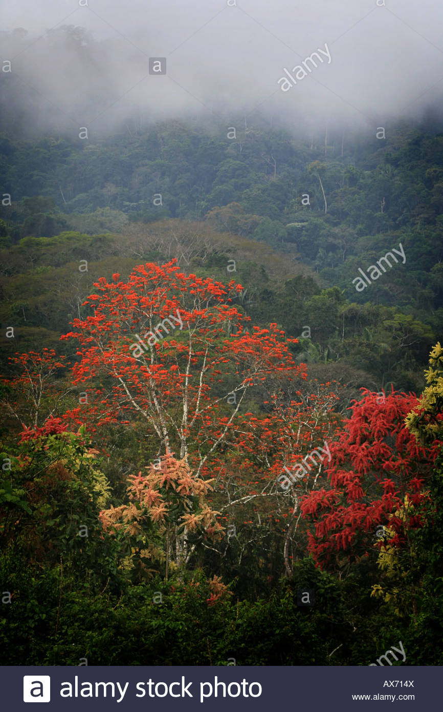 Misty rainforest vicino a Cana la stazione di campo nel Parco Nazionale del Darién, Repubblica di Panama. Immagini Stock