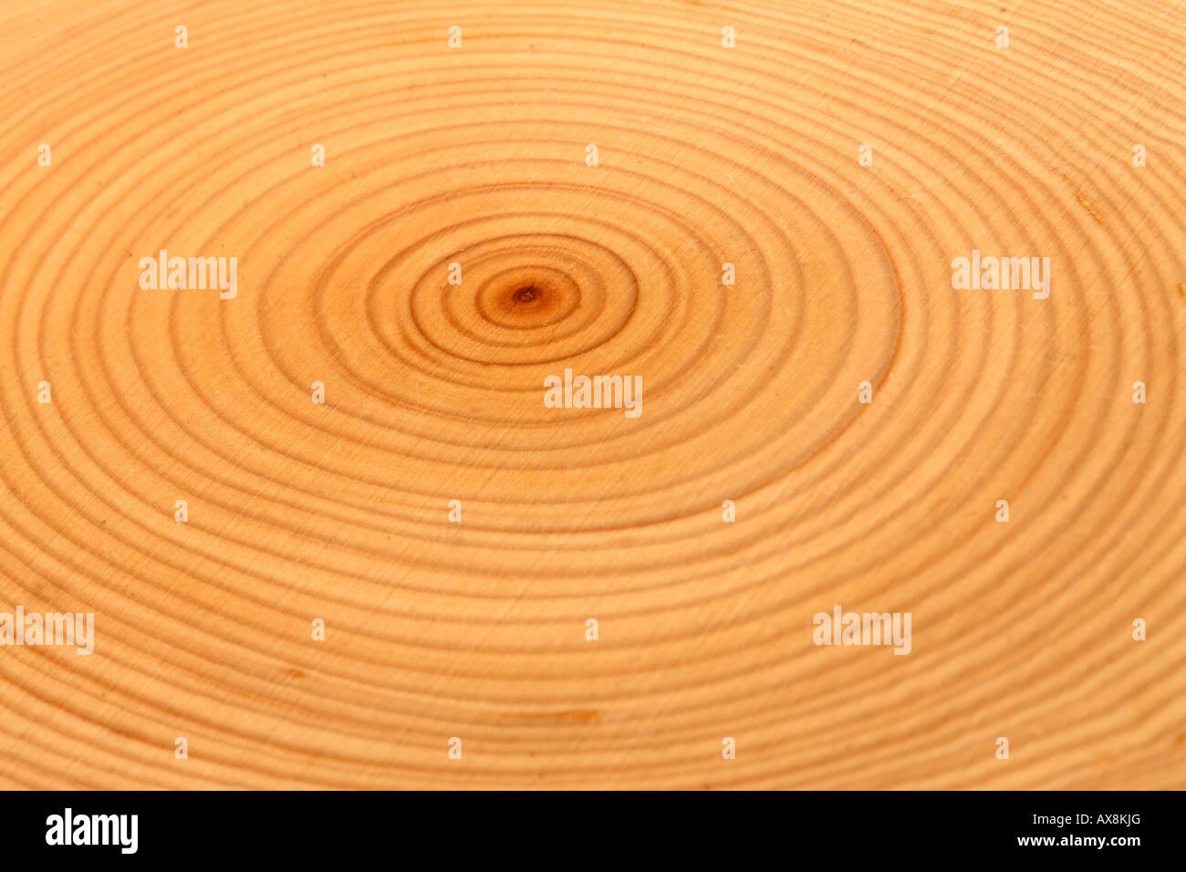 Close up cut albero che mostra anelli Immagini Stock