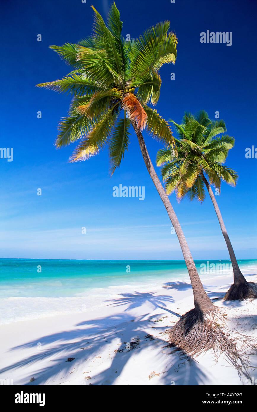 Palm tree, spiaggia di sabbia bianca e Oceano Indiano, Jambiani, isola di Zanzibar, Tanzania, Africa orientale, Immagini Stock