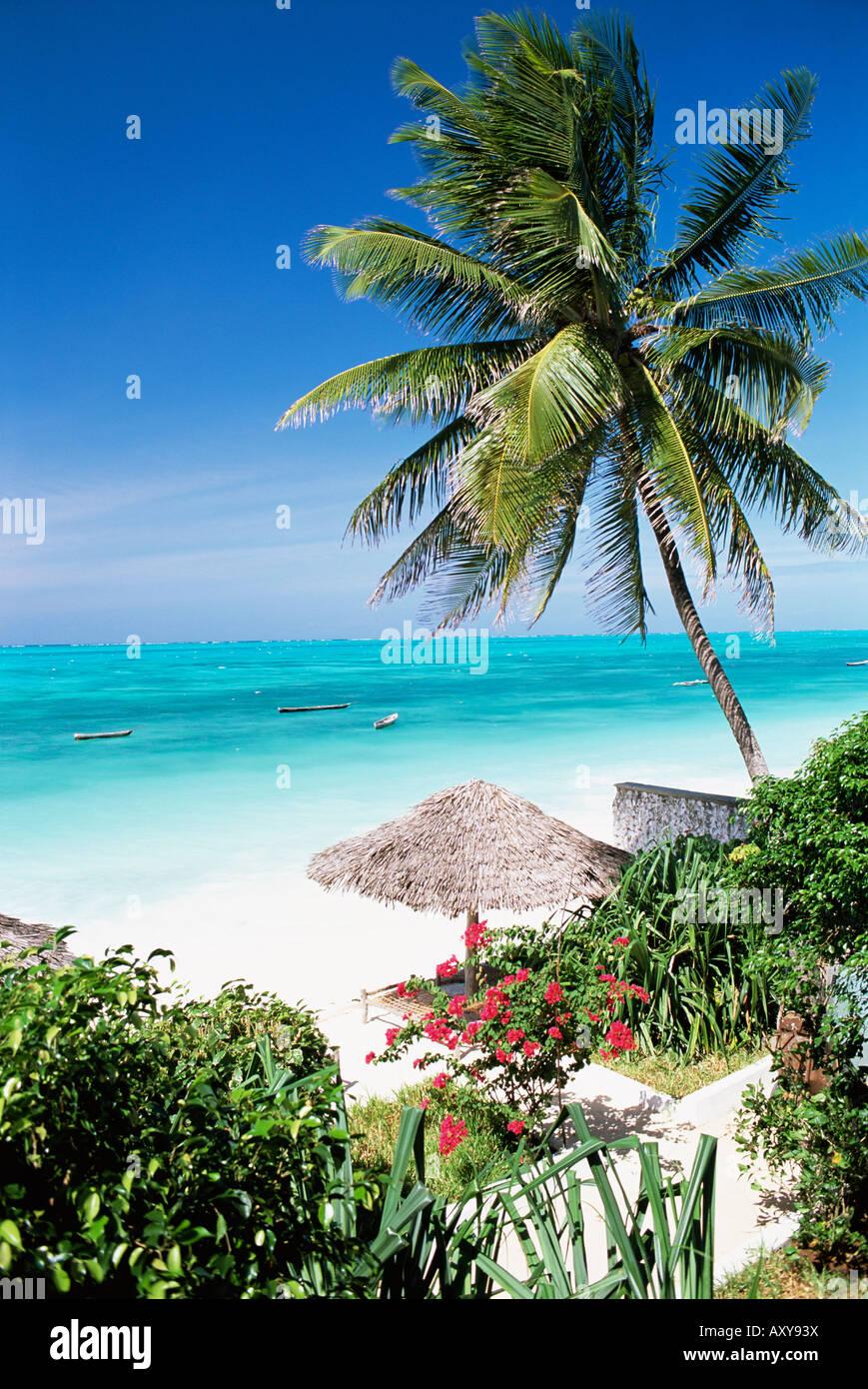 Vista attraverso le palme verso la spiaggia e Oceano Indiano, Jambiani, isola di Zanzibar, Tanzania, Africa orientale, Immagini Stock