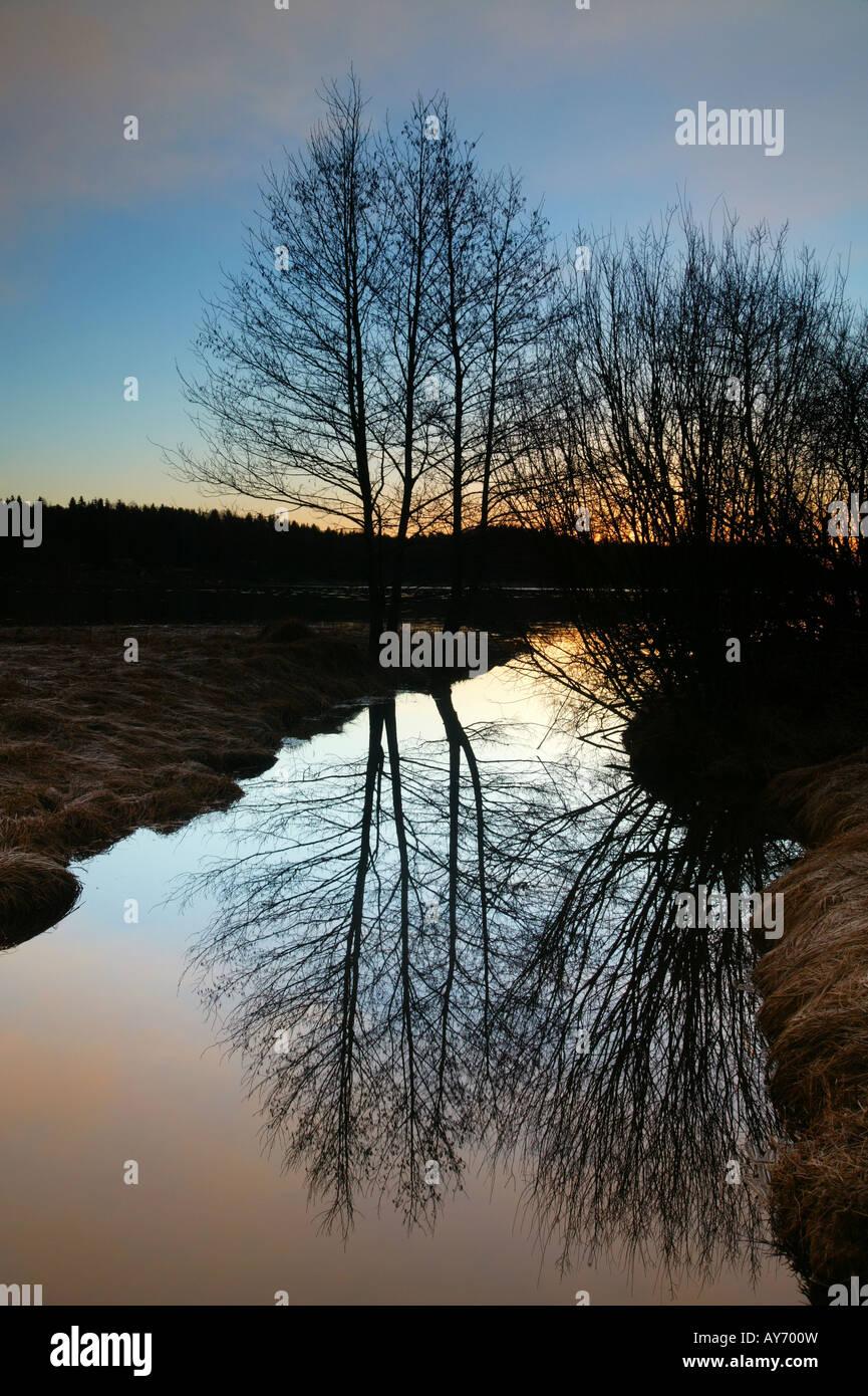 Alberi e riflessioni a sunrise da Vanemfjorden nel lago Vansjø, Moss kommune, Østfold fylke, Norvegia. Immagini Stock
