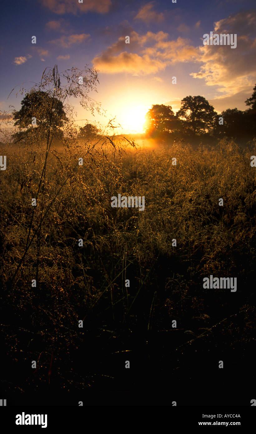 Alba nel campo vicino Longburton Dorset Regno Unito Immagini Stock