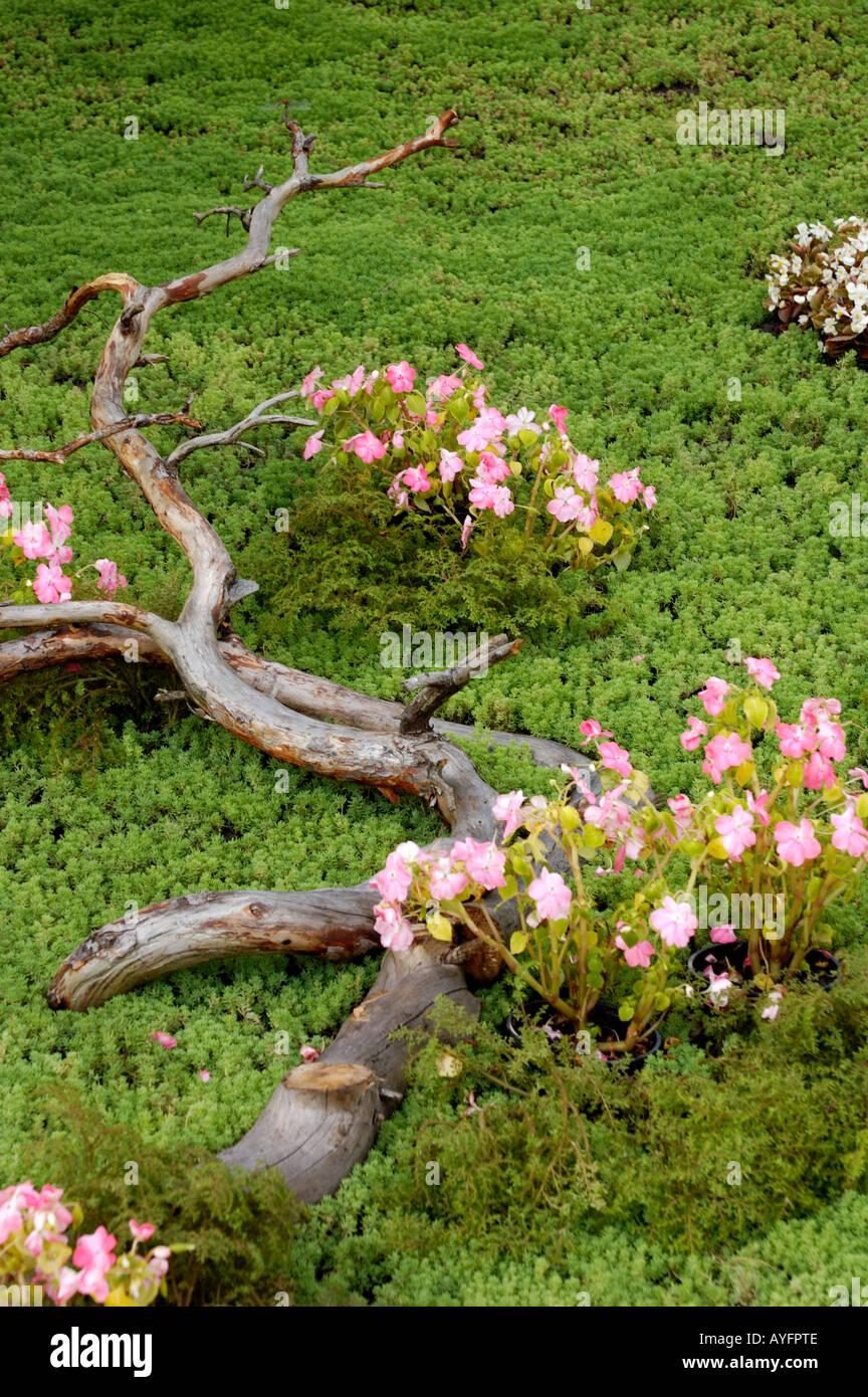 Giardinaggio E Fiori.Giardinaggio E Fiori Foto Immagine Stock 9768973 Alamy