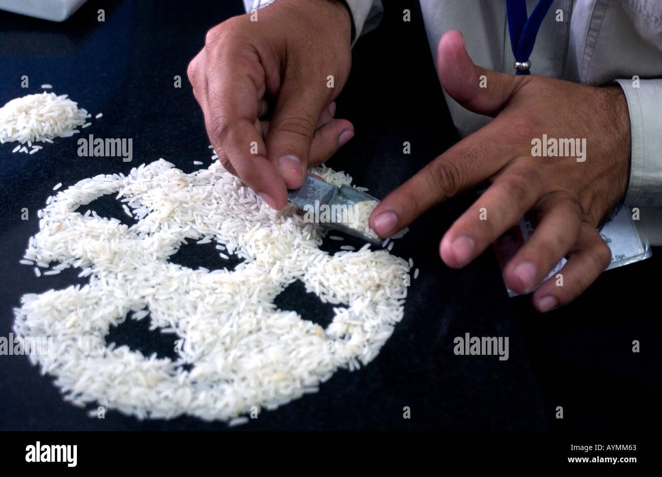 L uomo lo smistamento dei chicchi di riso per il confezionamento del riso impianto di trasformazione in India del nord Immagini Stock