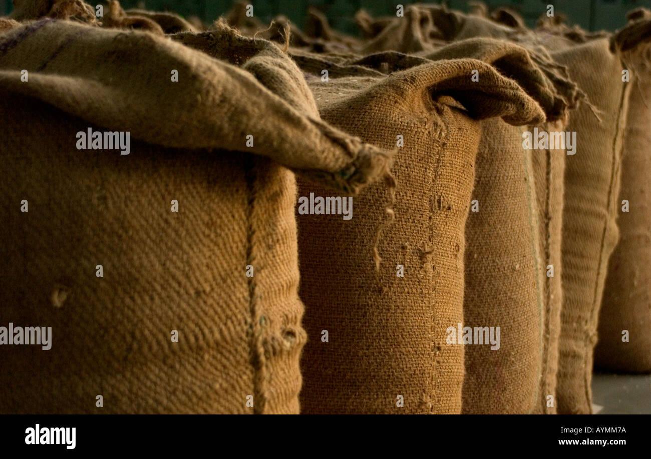 Sacchi di riso in attesa di esportazione in Europa dall'India Immagini Stock