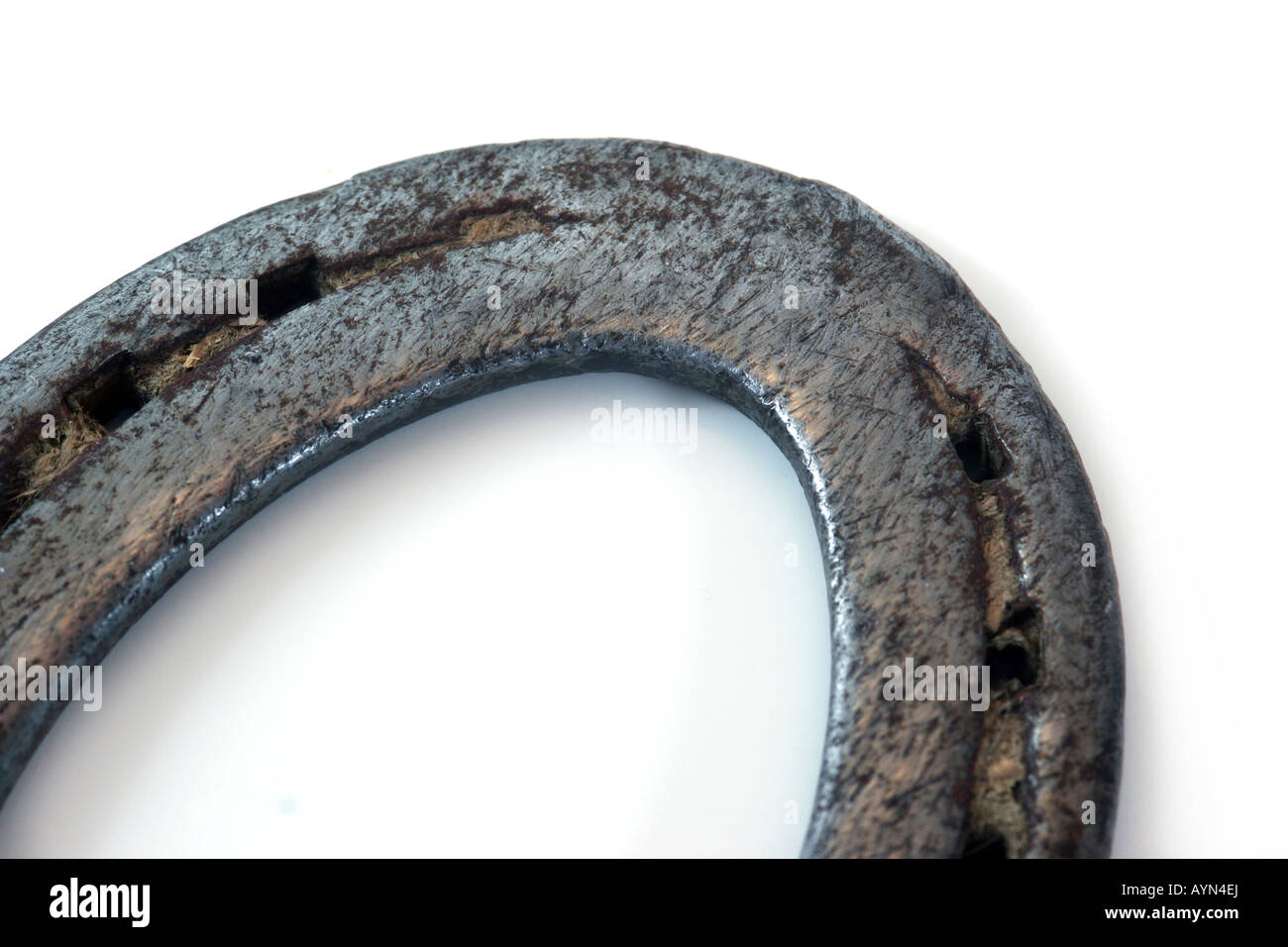 Ferro di cavallo macro isolato Immagini Stock