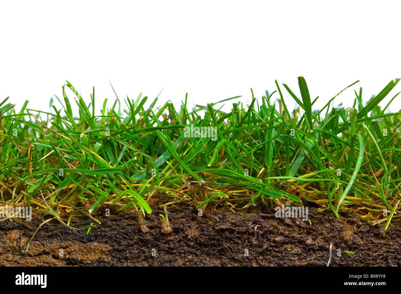 Sezione trasversale di un pezzo di turf sparato contro uno sfondo bianco Immagini Stock