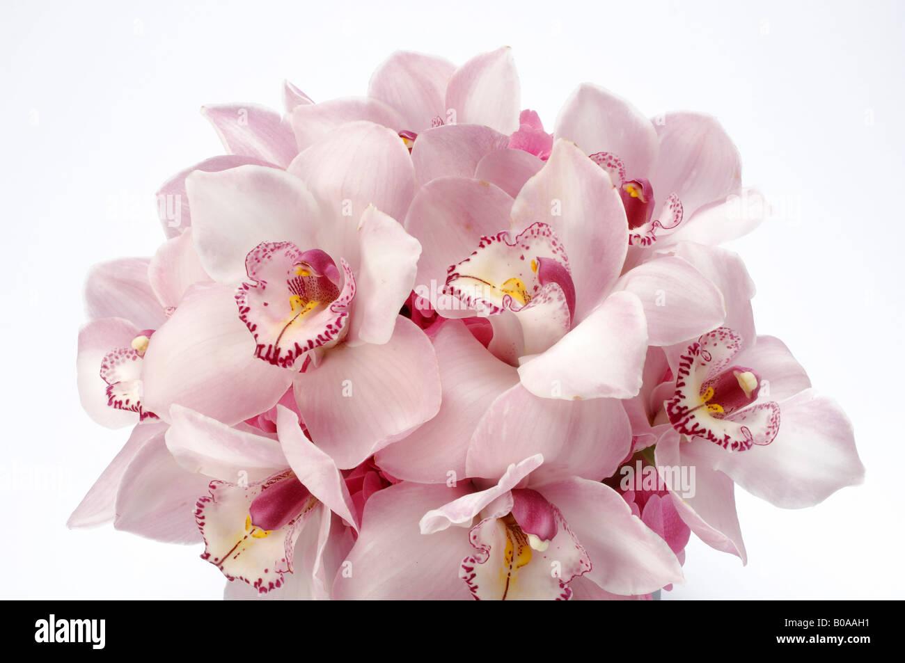 Un mazzo di fiori disposti, Rosa orchidee Cymbidium Immagini Stock