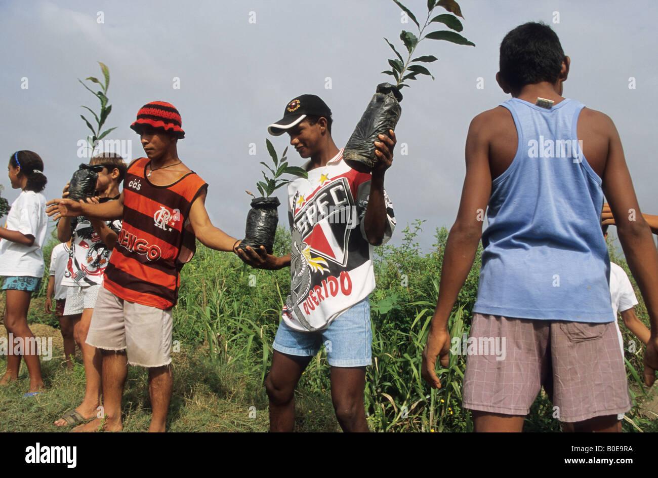 Remota foresta pluviale comunità scarico albero della foresta pluviale piantine per reafforest un area di deforestazione Immagini Stock
