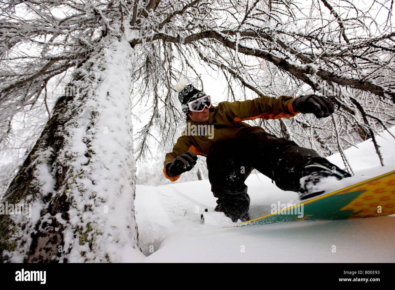 Snowboarder fuori pista a cavallo attraverso gli alberi Immagini Stock