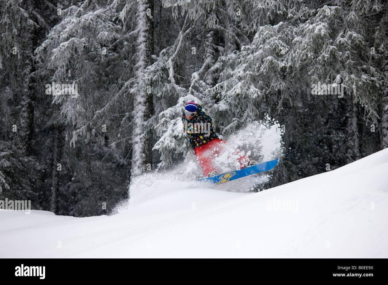 Jo Howard riduce la polvere di neve fuori pista in alberi Immagini Stock