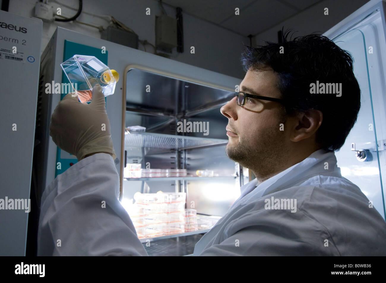 La ricerca sulle cellule staminali, Istituto Max Planck per la genetica molecolare, tecnico di laboratorio presso Immagini Stock