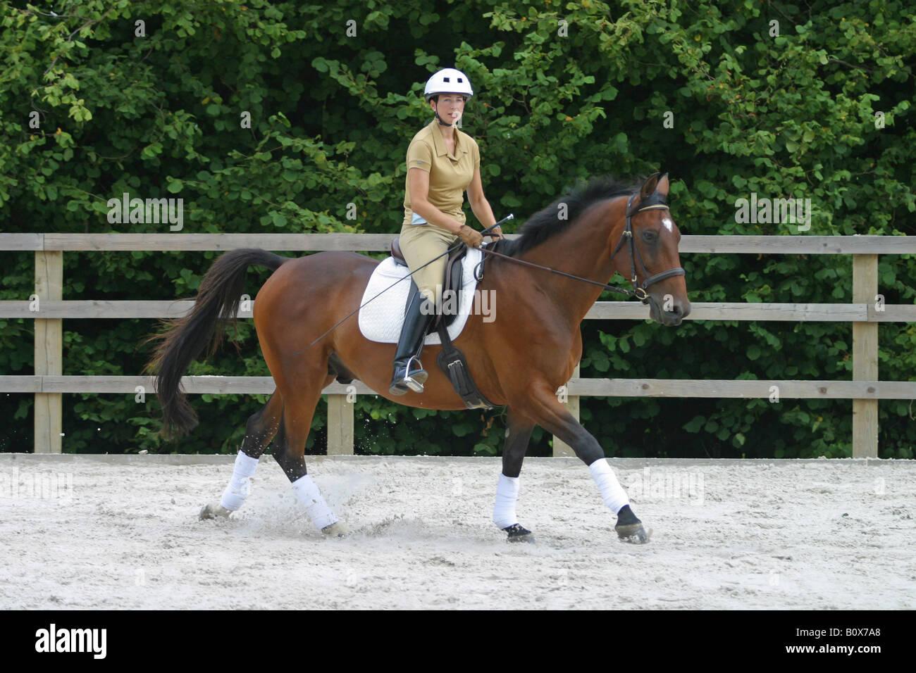 Una donna che esercitano il proprio cavallo in una scuola di equitazione Immagini Stock