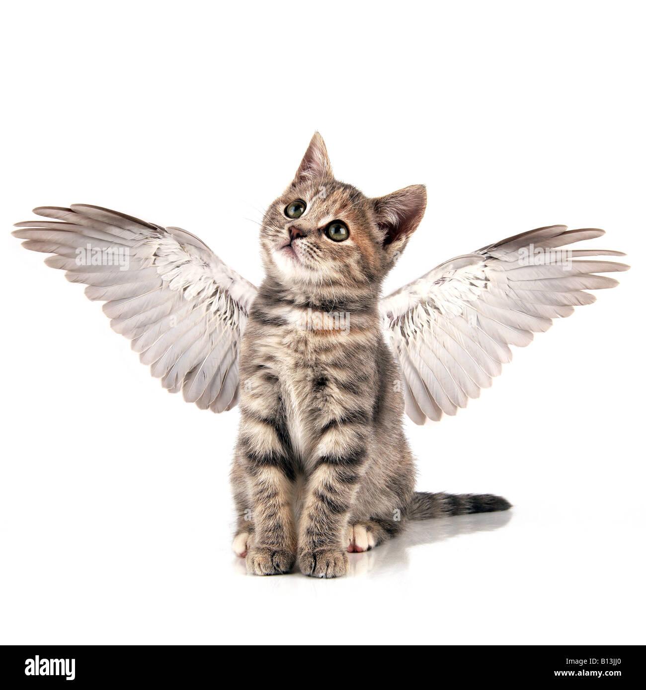 Gattino di Angelo Immagini Stock