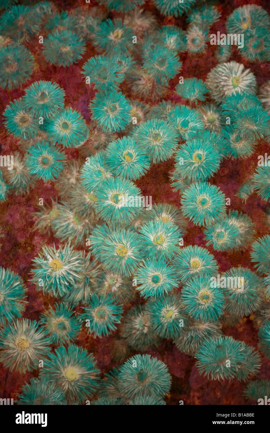 Abstract illustrazione dei fiori Immagini Stock