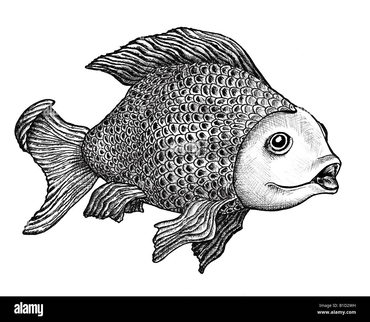 Disegno a inchiostro di una carpa di grandi dimensioni con un enigmatico espressione sul viso Immagini Stock