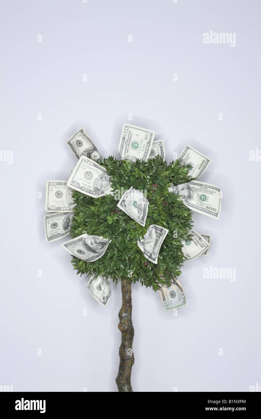 Concetto finanziario il denaro cresce su un albero Immagini Stock