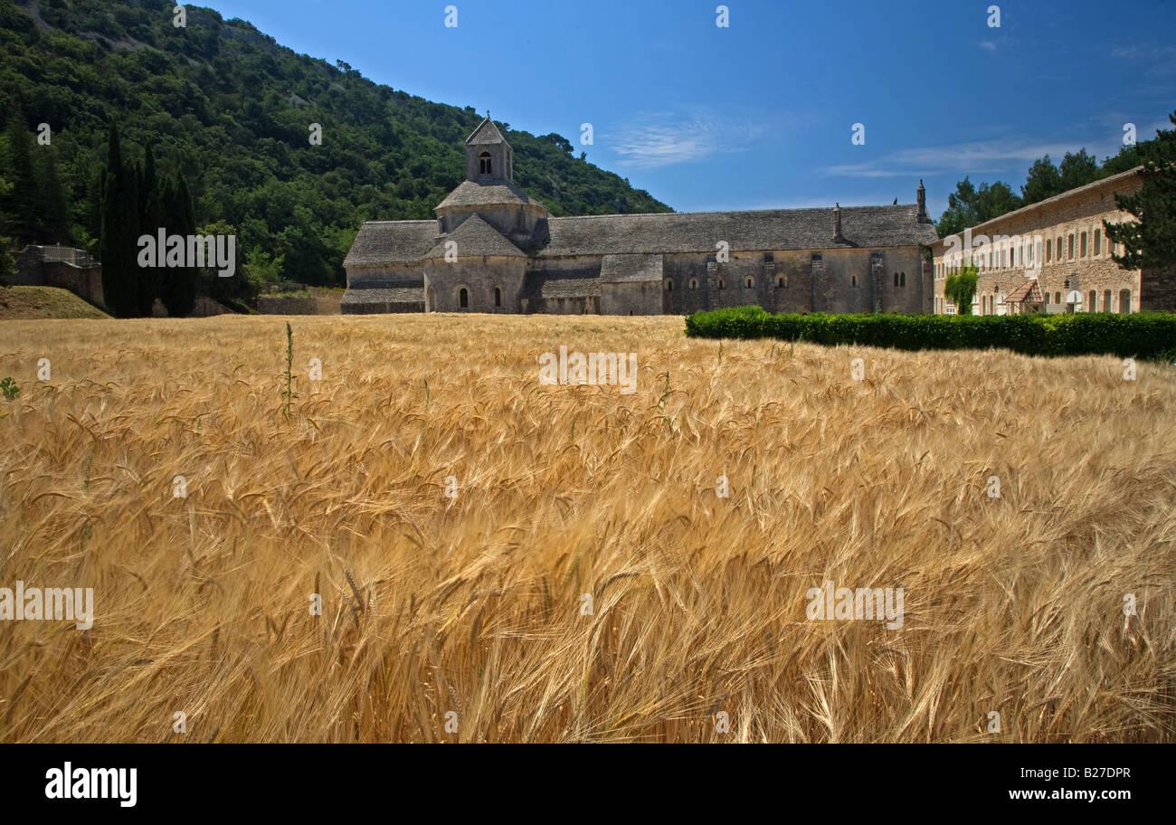 Campo di grano vicino a L'Abbe de Senanque, Provenza. Immagini Stock