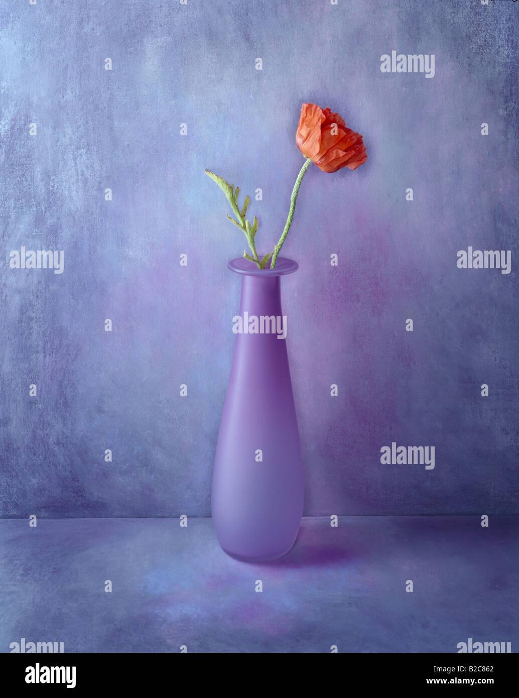 1 di una serie di ritratti a colori formato foto a colori questa è di un fiore rosso su un dipinto a mano sfondo Immagini Stock