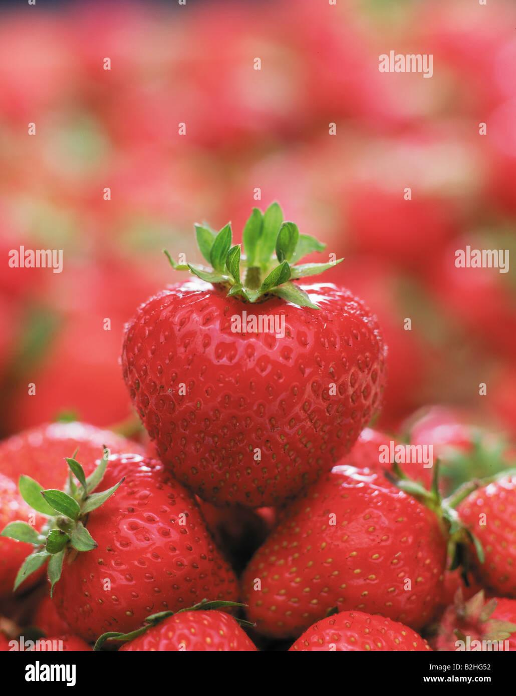Erdbeere fragaria fragola fresa sammelnussfruechte obst heilpflanze nahrungsmittel Immagini Stock